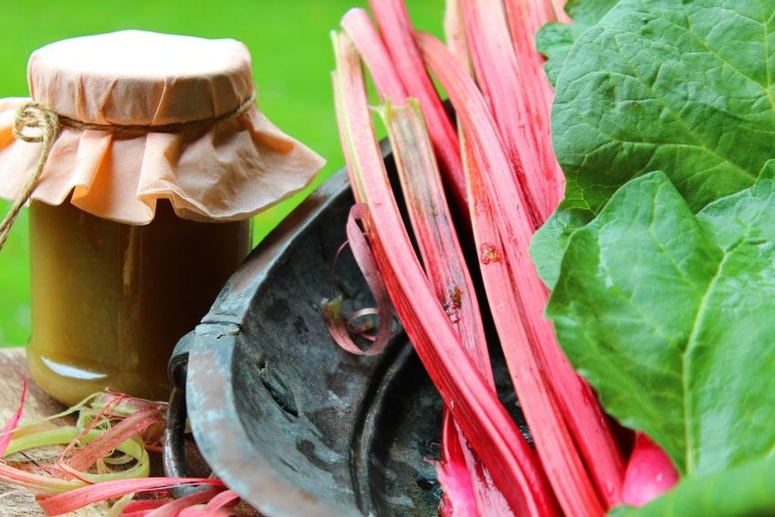 Rezept für Rhabarberkompott ohne Zucker